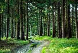 森林绿色植物风景