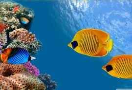 热带海底世界图片电脑桌面壁纸下载