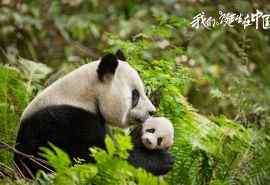 纪录片《我们诞生在中国》动物图片桌面壁纸