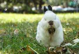 呆萌可爱的兔子图片桌面壁纸