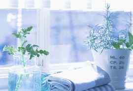 室内清新盆栽摄影桌面壁纸