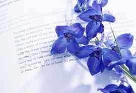 紫色甜美花朵静物