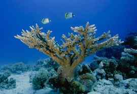 海底动物世界桌面