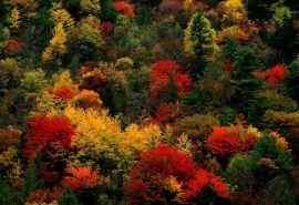 群集秋天的红叶美