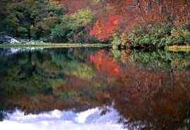 湖泊秋天的红叶倒