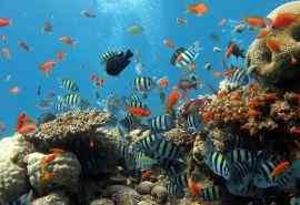 奇幻海底世界高清桌面壁纸