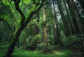 美丽的大自然森林深处风景桌面壁纸