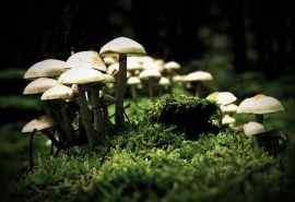 自然蘑菇野味随拍