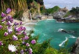 加利福尼亚山谷花