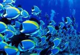 热带海底世界动物摄影高清壁纸图片大全第二辑