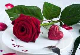 唯美玫瑰花卉精选高清桌面壁纸图片大全