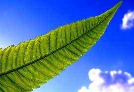 蓝天绿叶绿色护眼清新植物电脑壁纸