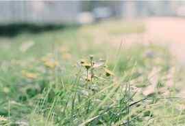 夏日小清新植物图