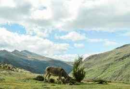 拉萨唯美草原风景图片桌面壁纸