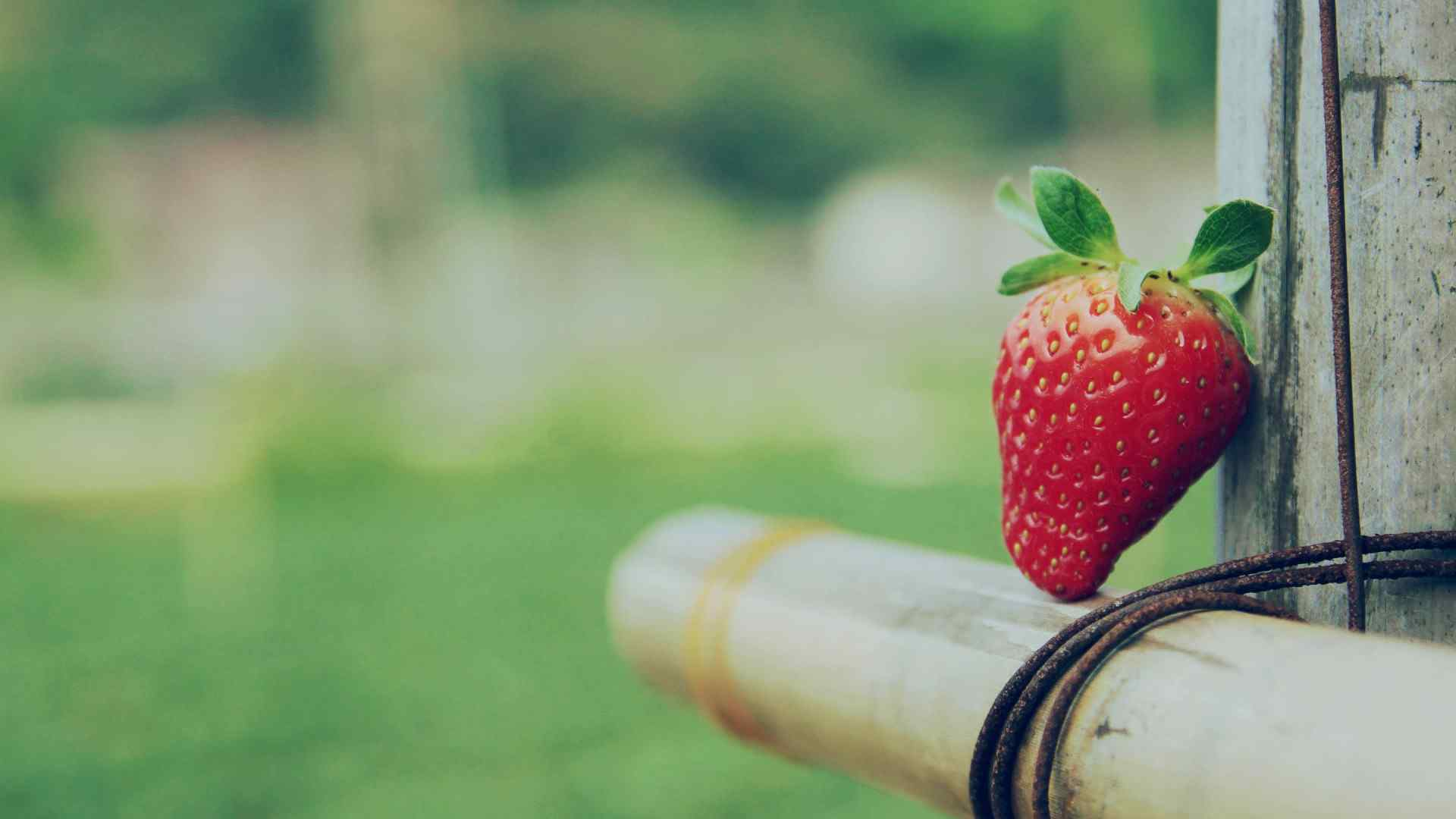 孤独的草莓小清新高清桌面壁纸下载