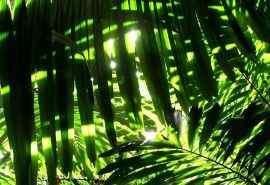 清新绿叶护眼风景