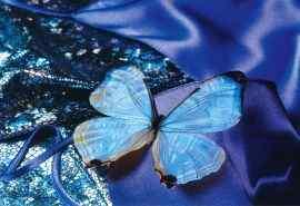 绚丽多彩的美丽蝴