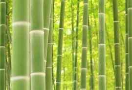 自然绿色竹子风景桌面壁纸下载
