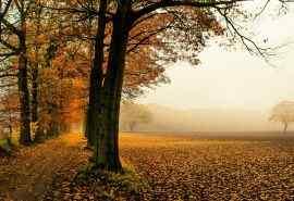 欧洲秋季唯美田园风光桌面高清壁纸图片大全