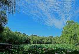 北京紫竹院公园唯