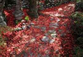 秋季小路散落的枫叶 唯美高清电脑桌面壁纸