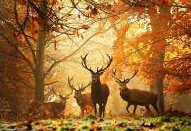 森林里的麋鹿唯美可爱摄影图片桌面壁纸