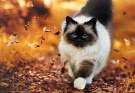 可爱猫咪行走高清电脑壁纸