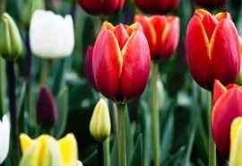 花朵植物清新摄影