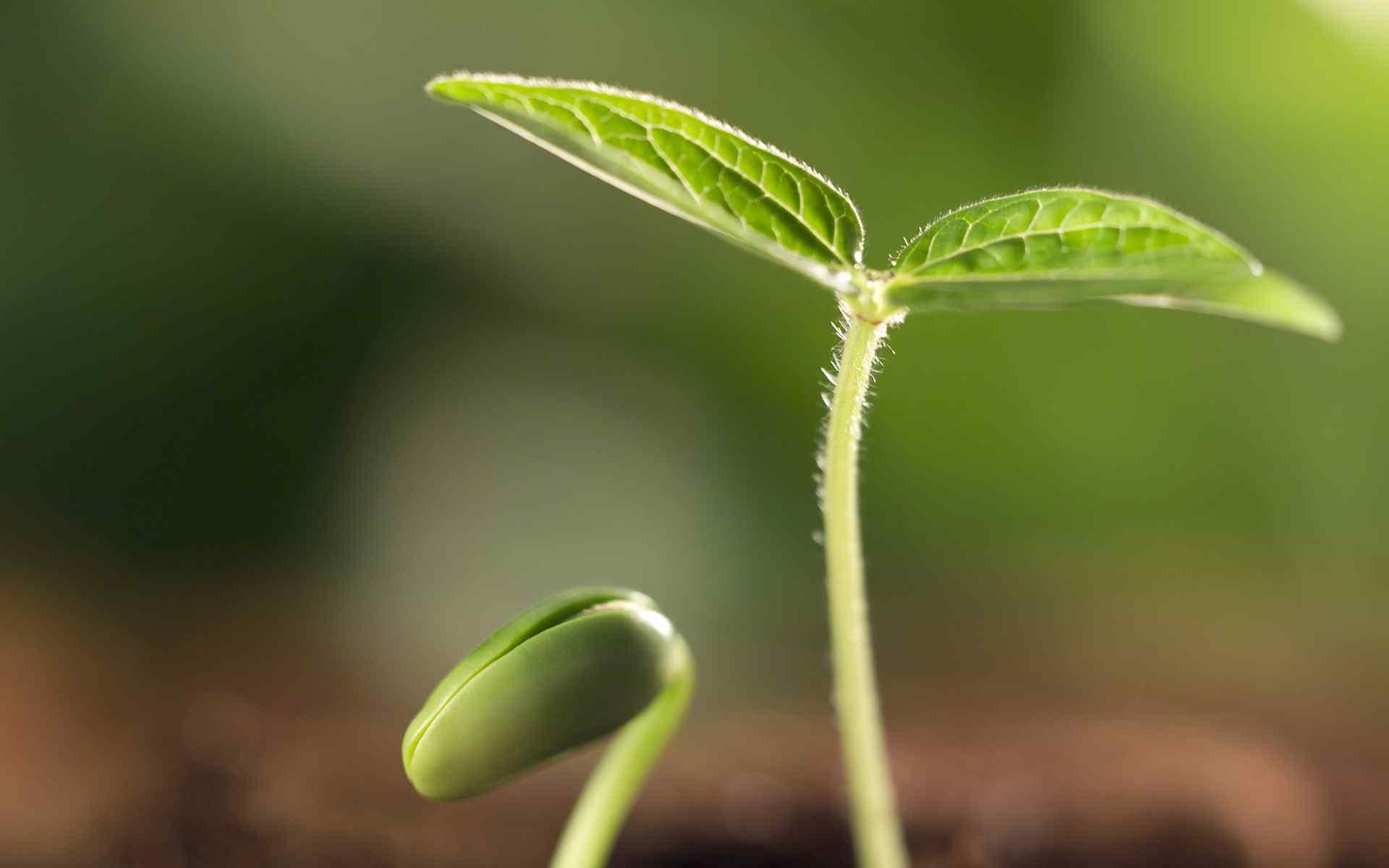 绿色护眼清新植物高清壁纸图片