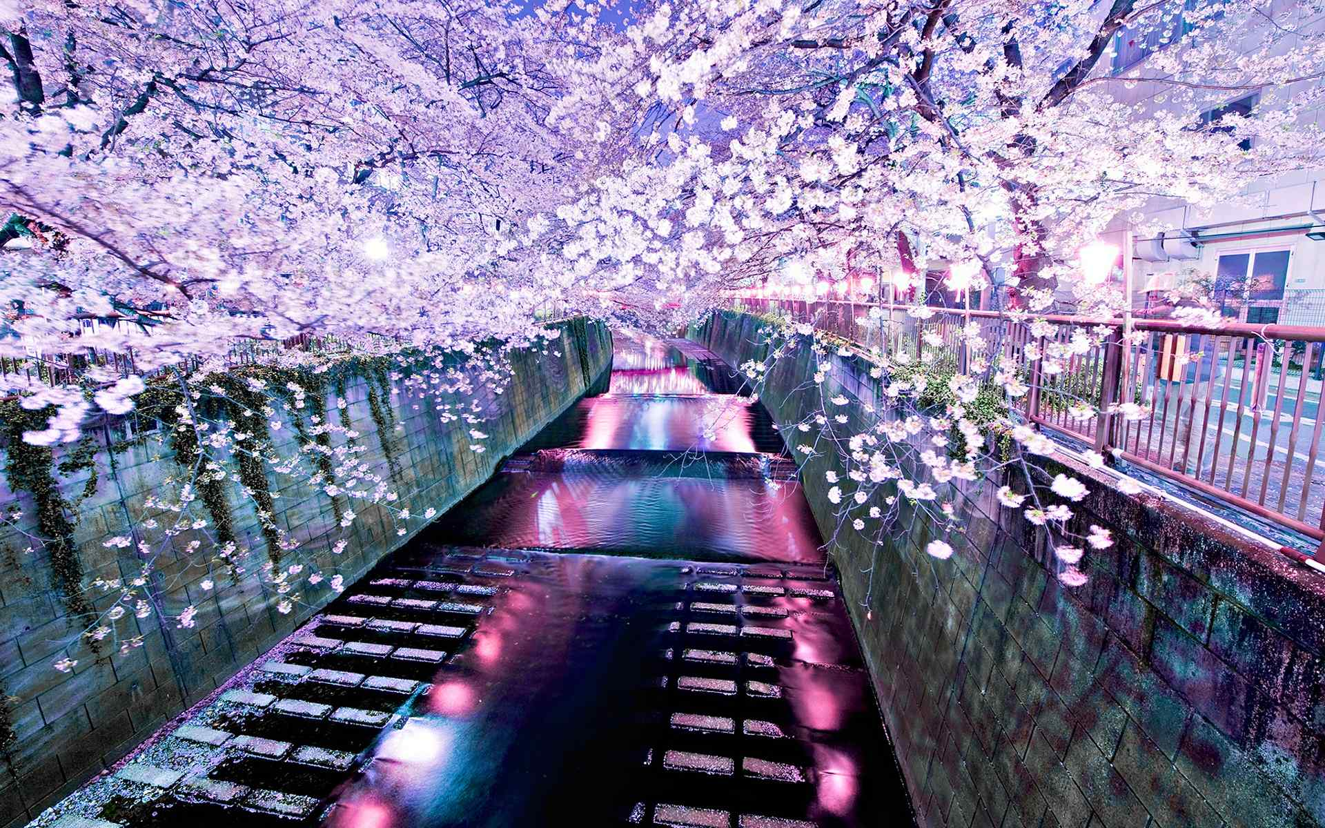 充满梦幻色彩的唯美樱花风景图片桌面壁纸