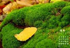 2016年10月日历清新绿色护眼植物高清壁纸