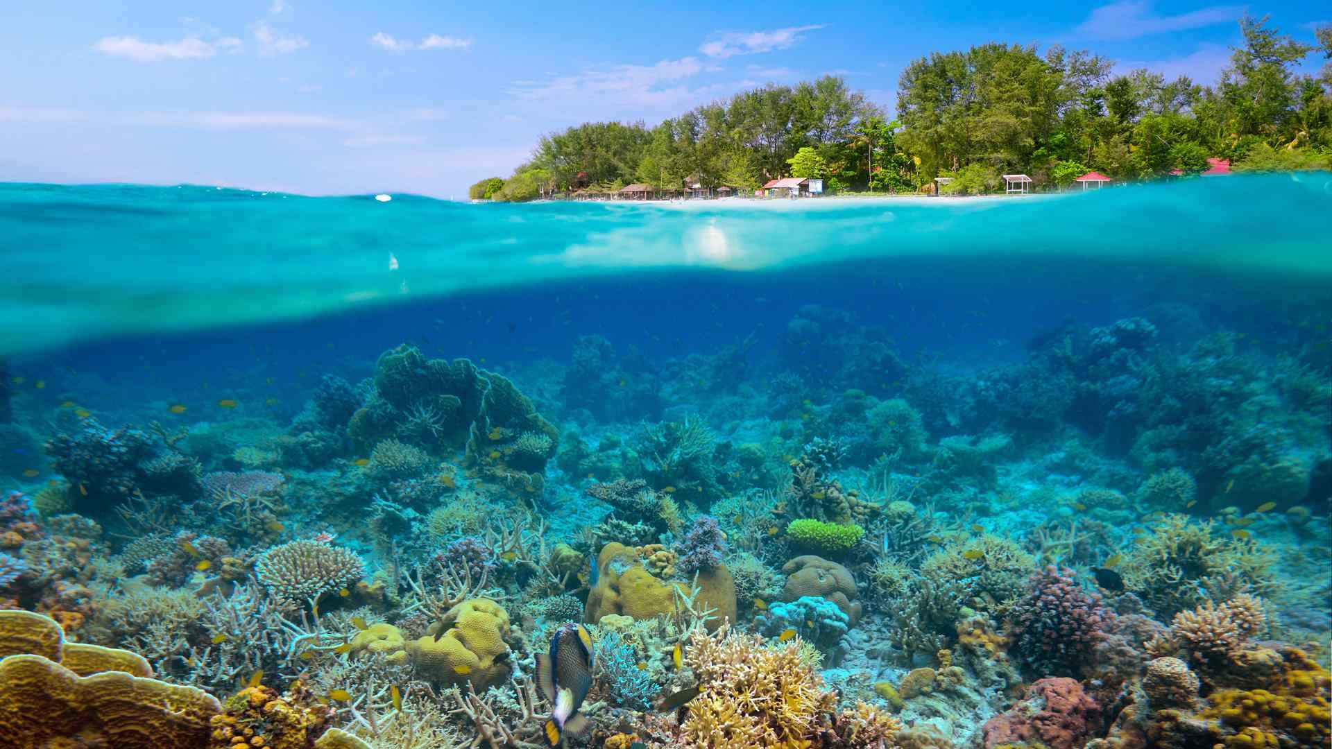 美丽的海底珊瑚礁高清风景图片桌面壁纸第一辑