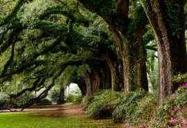 绿色树林清爽紫罗兰风景桌面壁纸