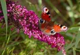 花丛中的蝴蝶唯美
