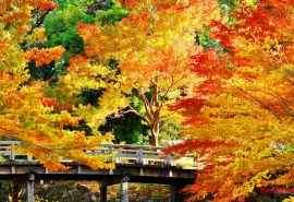 唯美的金色秋天的