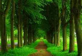 森林绿树林间小道