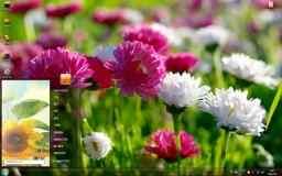 灿烂养眼的花卉高