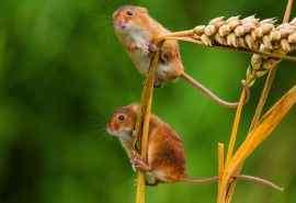 松鼠与大自然清新高清摄影桌面壁纸下载(9张)