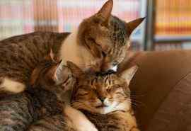 可爱呆萌小猫动物