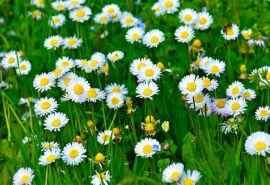 小清花卉新植物图