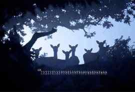 唯美孤寂的森林麋鹿11月日历壁纸