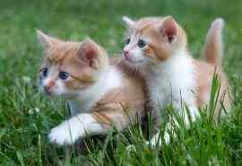 草地里的可爱猫咪