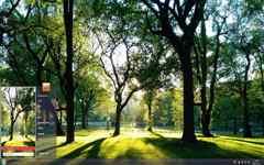 阳光下的小清新森
