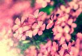 唯美清新的花卉植