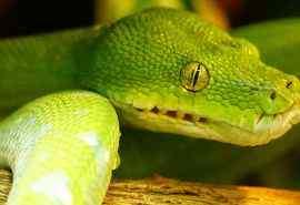 绿色蟒蛇动物图片