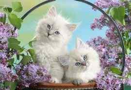 花篮里的可爱猫咪