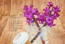 2016年11月日历唯美的风信子花卉植物图片电脑桌面壁纸