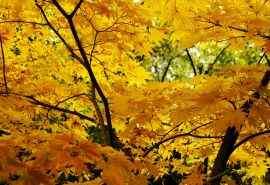 唯美秋天树叶风景