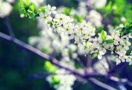 超好看的花卉植物