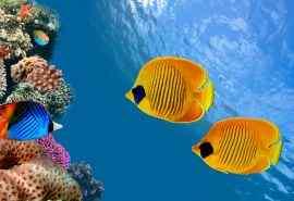 泰国湾暹罗湾奇妙的海底世界高清电脑桌面壁纸